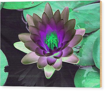 Wood Print featuring the photograph The Water Lilies Collection - Photopower 1114 by Pamela Critchlow