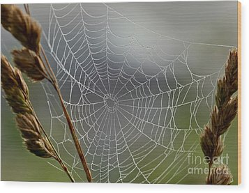 Wood Print featuring the photograph The Web by Kerri Farley