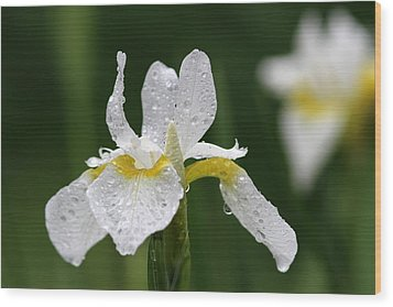 The White Iris Wood Print by Juergen Roth