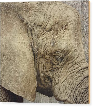 Wood Print featuring the photograph The Wise Old Elephant by Nikki McInnes