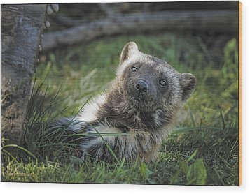 The Wolverine Skunk Bear Happy Face Wood Print by LeeAnn McLaneGoetz McLaneGoetzStudioLLCcom