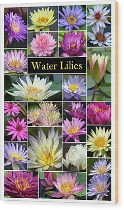 Wood Print featuring the photograph The Wonderful World Of Water Lilies by Cindy McDaniel