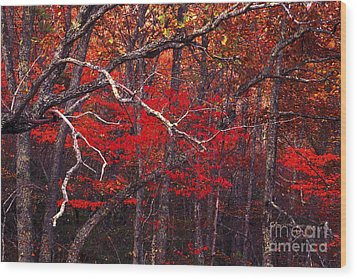 The Woods Aflame In Red Wood Print by Paul W Faust -  Impressions of Light
