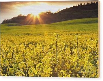 The Yellow Rapeseed Field Beautiful Wood Print by Boon Mee