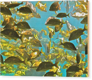 Theres Plenty Of Fish In The Sea Wood Print by Amanda Just