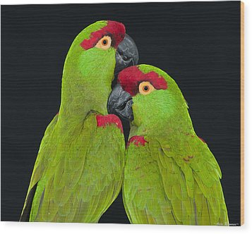 Wood Print featuring the photograph Thick-billed Parrot Pair by Avian Resources