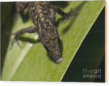 Wood Print featuring the photograph Thirsty Brown Anole by Meg Rousher