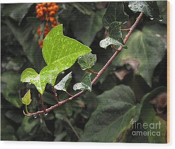 Wood Print featuring the photograph Thirsty by Ellen Cotton