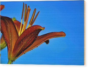 Thirsty Lily In Hdr Art Wood Print by Lesa Fine