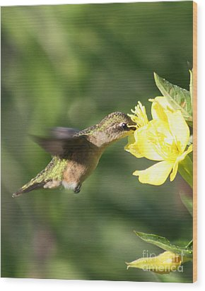Wood Print featuring the photograph Thirsty Little Hummingbird by Anita Oakley