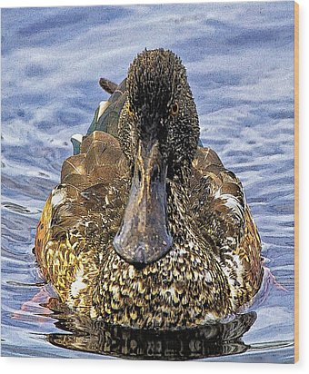 This Bill Is Made For Shoveling  Northern Shoveler Wood Print by Constantine Gregory