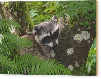 This Is A Nice Spot To Sleep Wood Print by Kym Backland