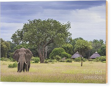 This Is Africa Wood Print
