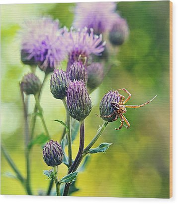Thistle And Spinner Wood Print by Gynt