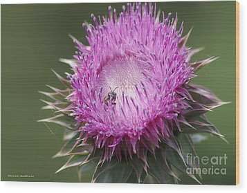 Thistle And The Bee Wood Print by Tannis  Baldwin