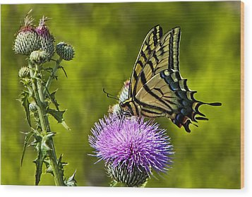 Wood Print featuring the photograph Thistle Do Just Fine by Gary Holmes