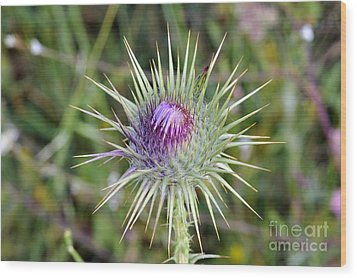 Wood Print featuring the photograph Thistle Flower by George Atsametakis