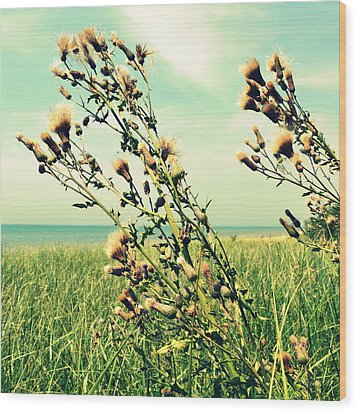 Thistle On The Beach  Wood Print by Michelle Calkins