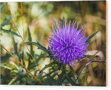 Wood Print featuring the photograph Thistle by Phil Abrams