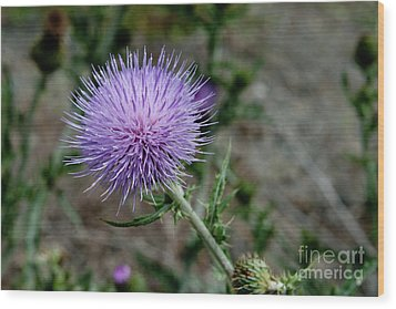 Wood Print featuring the photograph Thistle by Rod Wiens
