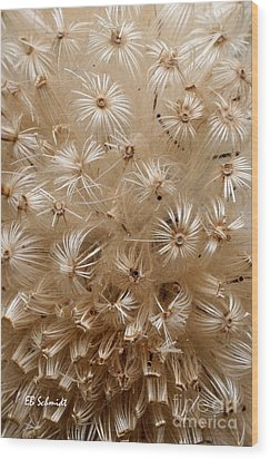 Thistle Seed Head Wood Print by E B Schmidt