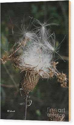 Thistle Seeds Wood Print by E B Schmidt