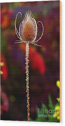 Wood Print featuring the photograph Thistle by Tom Brickhouse