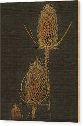 Wood Print featuring the photograph Thistles by Hanny Heim