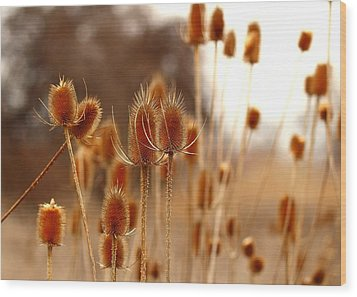 Wood Print featuring the photograph Thistles by Lynn Hopwood