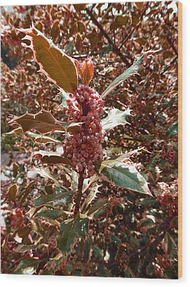 Wood Print featuring the photograph Thorn Berry by Laurie Tsemak