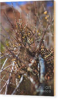 Thorns On Fence Wood Print