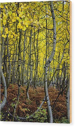 Wood Print featuring the photograph Through The Aspen Forest by Ellen Heaverlo