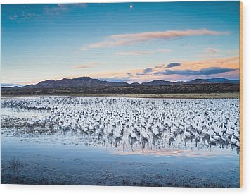 Snow Geese And Sandhill Cranes Before The Sunrise Flight - Bosque Del Apache, New Mexico Wood Print by Ellie Teramoto