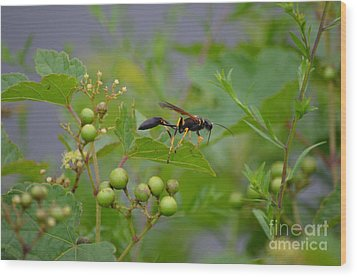 Wood Print featuring the photograph Thread-waist Wasp by James Petersen