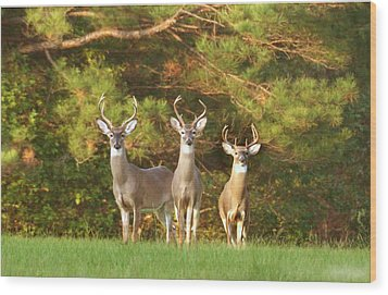 Three Amigos Wood Print