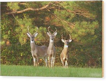 Three Amigos Wood Print by Robert Camp