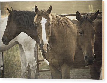 Wood Print featuring the photograph Three Amigos by Steven Bateson