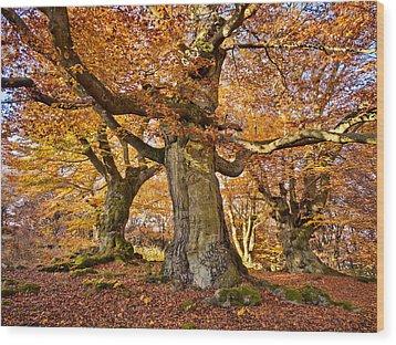 Three Ancient Beech Trees - Germany Wood Print by Martin Liebermann