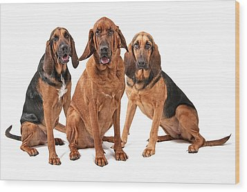 Three Bloodhound Dogs Isolated On White Wood Print by Susan Schmitz