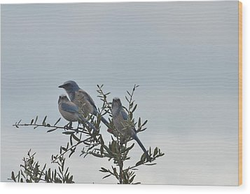 Three Blue Amigos Wood Print