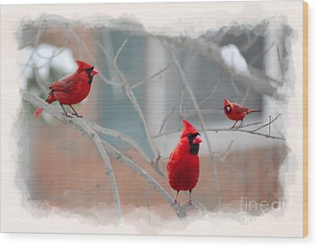 Three Cardinals In A Tree Wood Print by Dan Friend