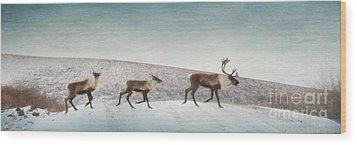 Three Caribous Wood Print by Priska Wettstein