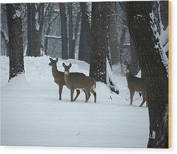 Wood Print featuring the photograph Three Deer In Park by Eric Switzer