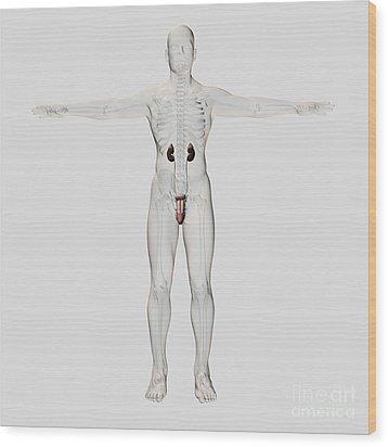 Three Dimensional Medical Illustration Wood Print by Stocktrek Images