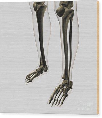 Three Dimensional View Of Human Leg Wood Print by Stocktrek Images