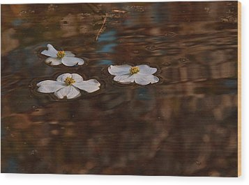 Wood Print featuring the photograph Three Dogwood Blooms In A Pond  by John Harding
