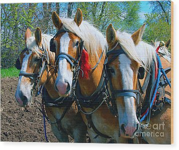 Wood Print featuring the photograph Three Horses Break Time  by Tom Jelen