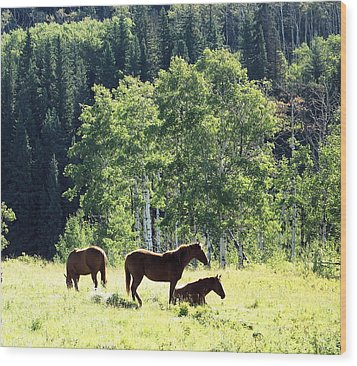Three Horses Wood Print by Gerry Bates