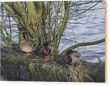 Three In A Row Wood Print by Spikey Mouse Photography