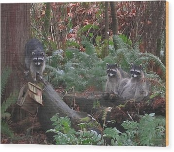 Three Is A Crowd Wood Print by Kym Backland